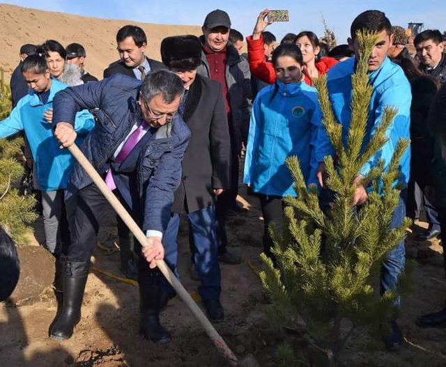 5 мың түп ағаш отырғызылды